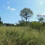 ブランシャールの森№33