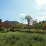 ブランシャールの森№1