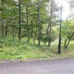 ブランシャールの森№45