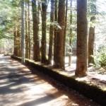 フーガの径別荘地