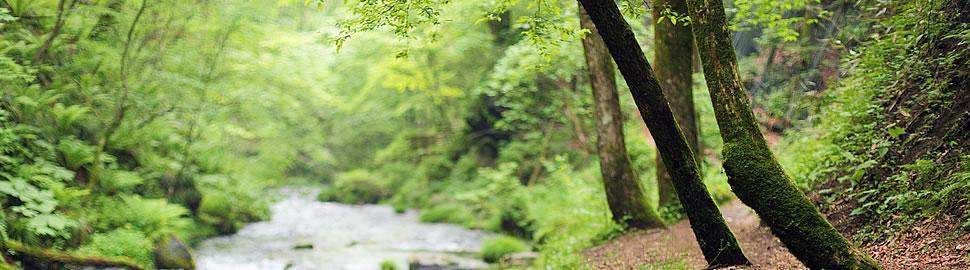 軽井沢―豊かな自然と調和した町
